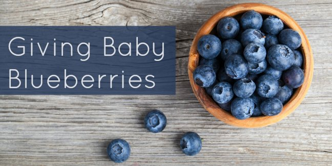blueberry-for-baby