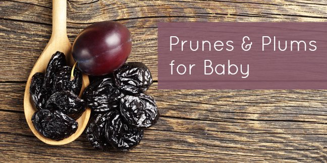 Yes babies can have both prunes and fresh plums! Find out how to prepare these yummy fruits for baby.